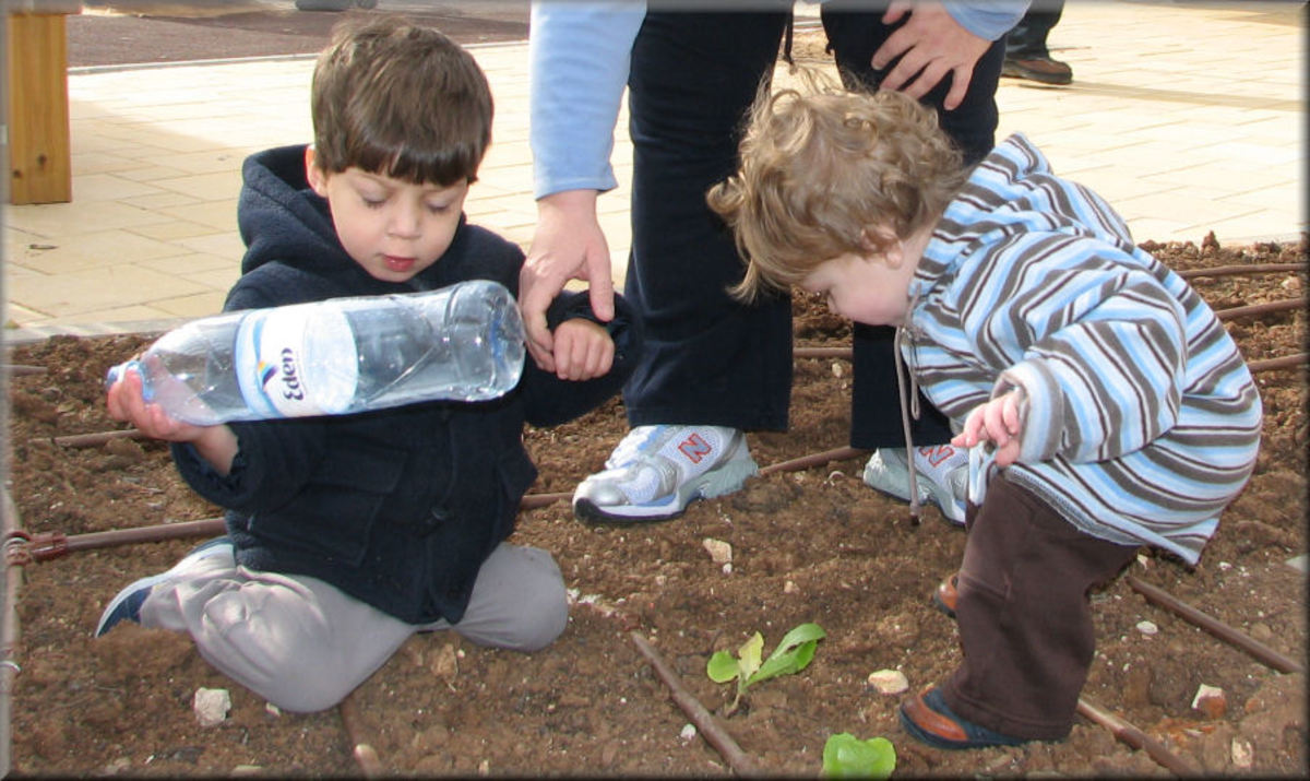 Tu Bishvat Is Celebrated By The Planting Of Trees