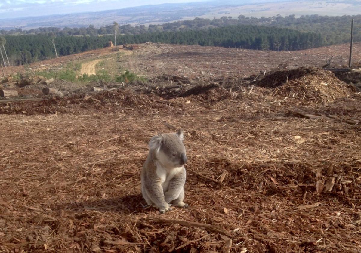 habitat loss