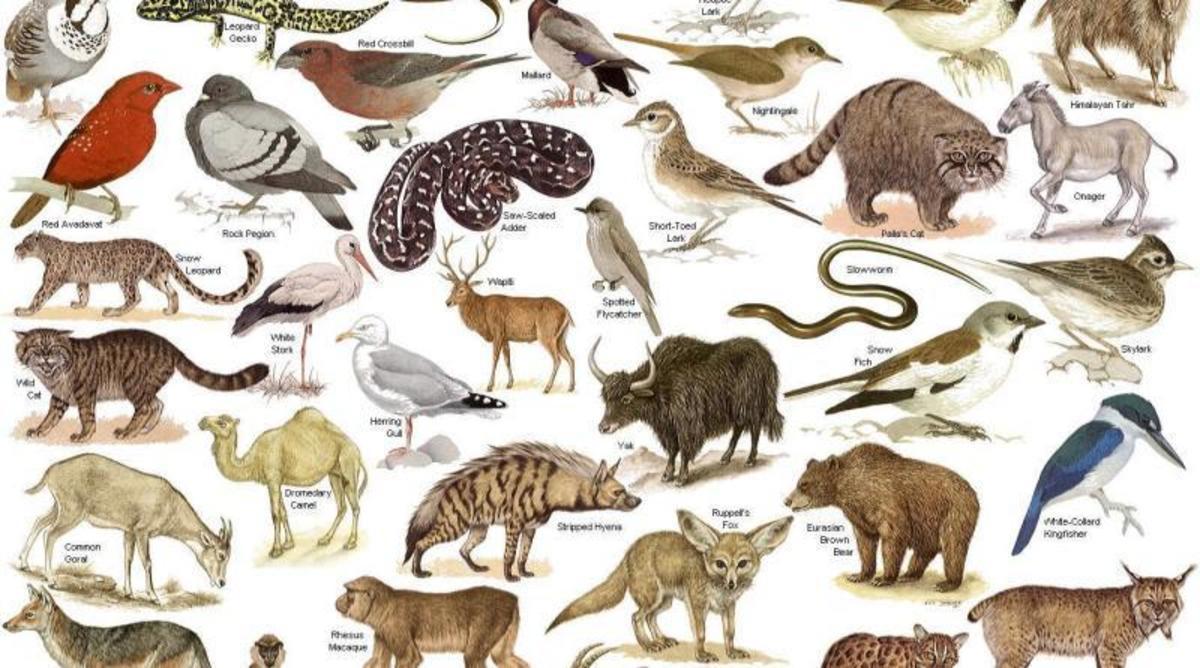 wildlife depletion