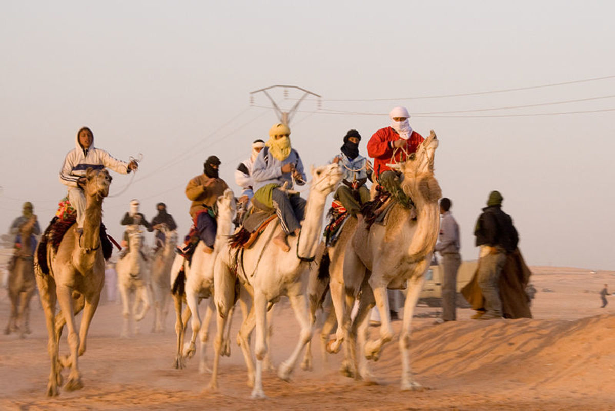 Camel racing in Algeria