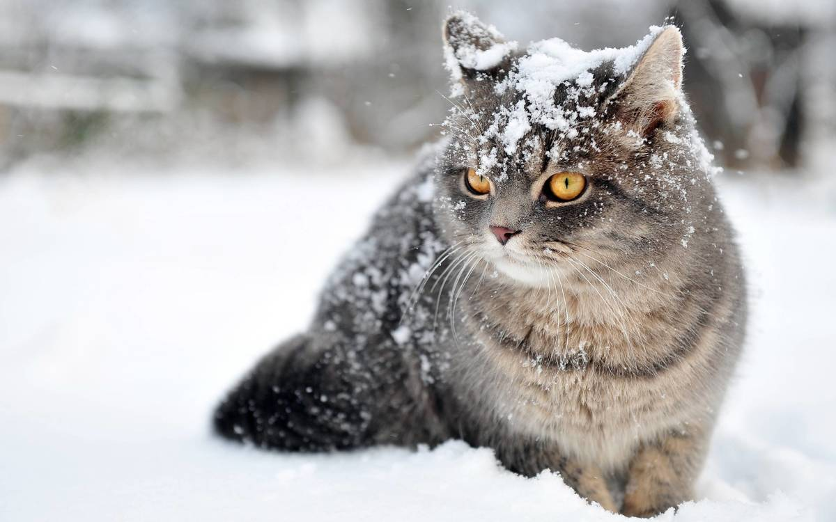 How to Treat Hypothermia in Cats