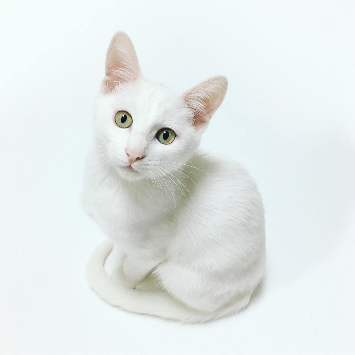 White rescue cats bring good luck, so do black cats in some cultures.