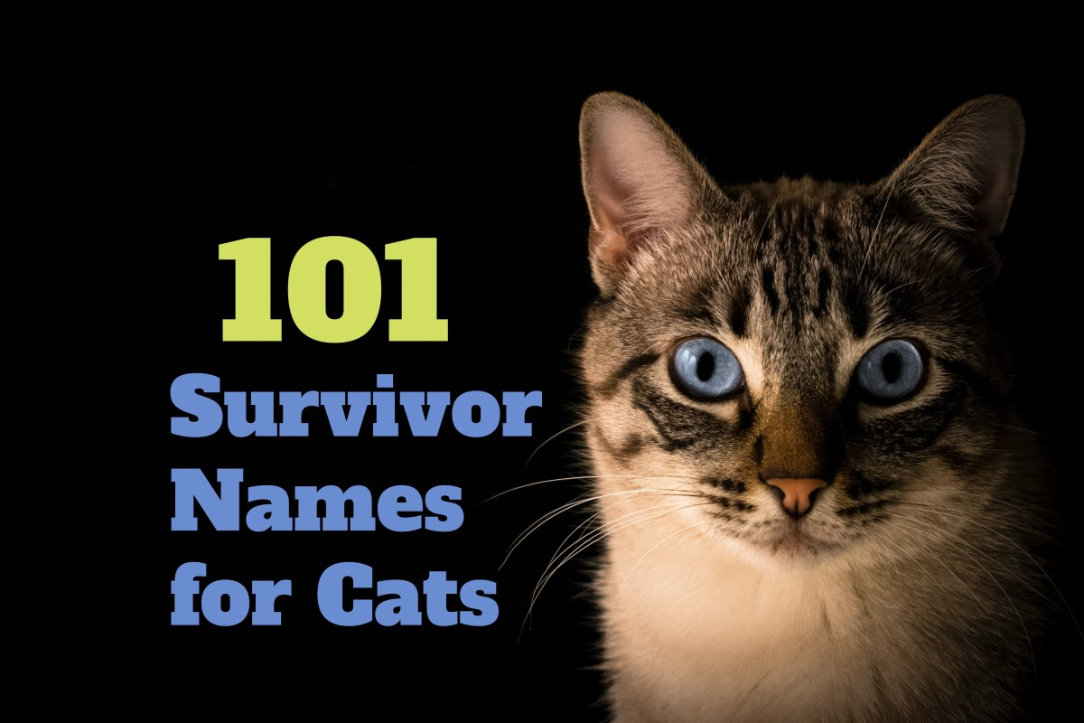 Cats, the ultimate survivors.