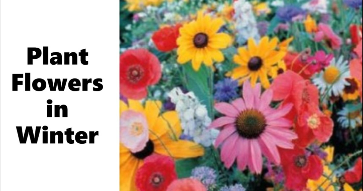Yes, You Can Plant Flowers in Winter! A Guide to Wintertime Sowing