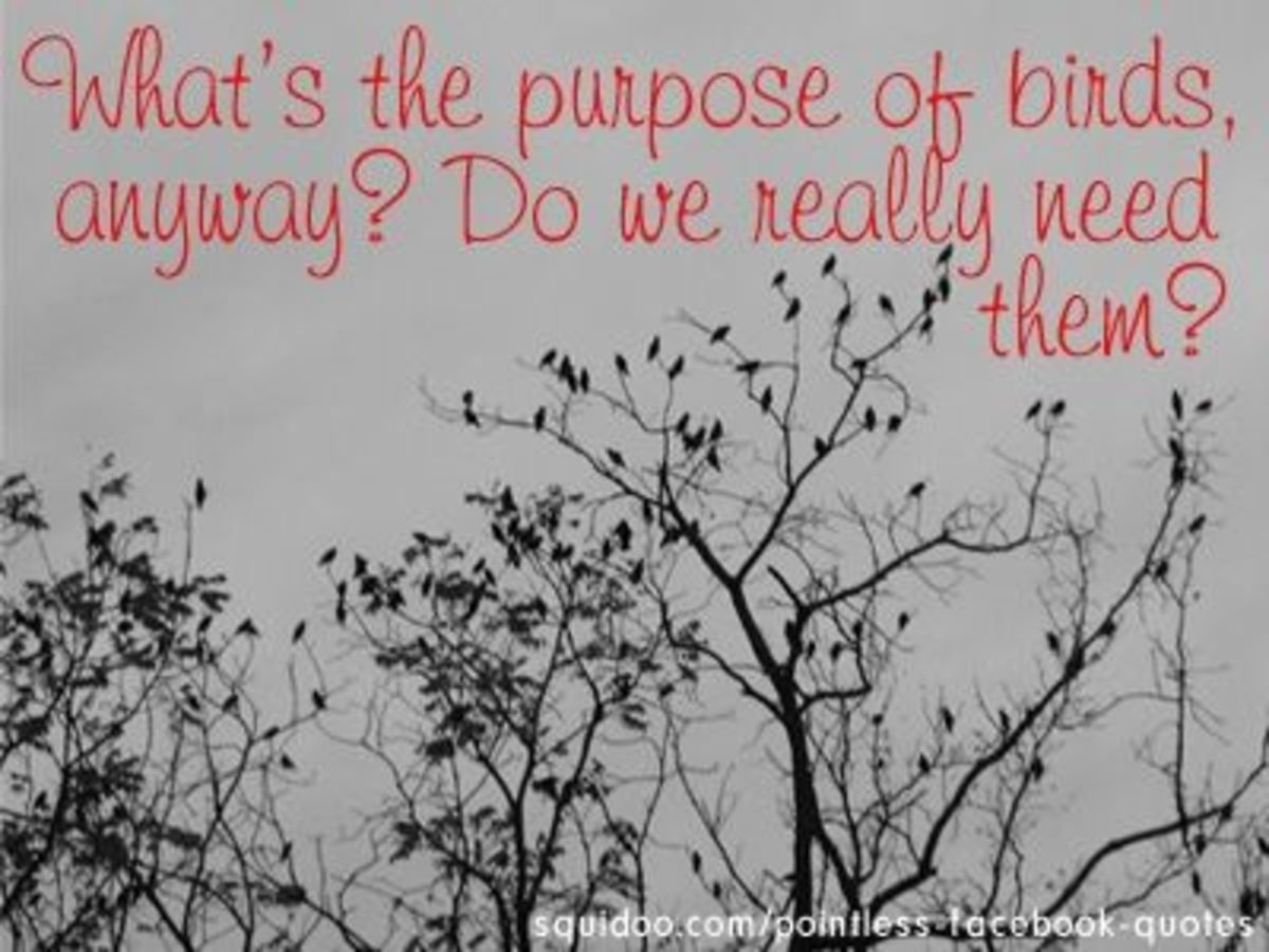 What's the purpose of birds?