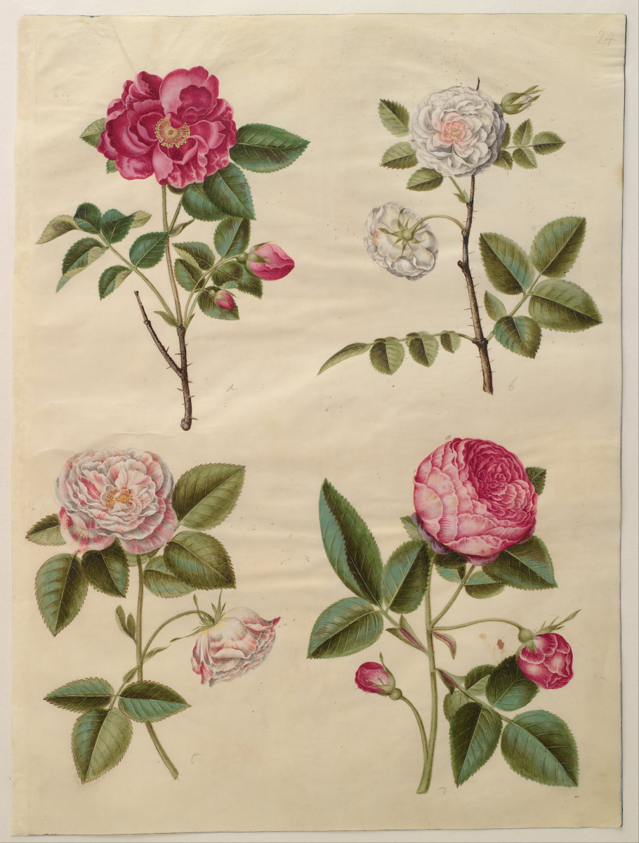 Victorian rose symbolism has a long tradition.