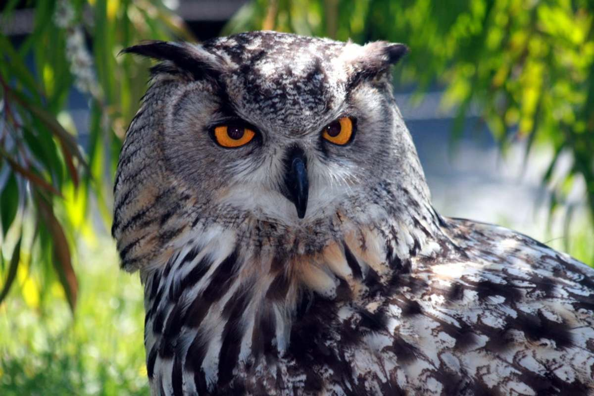 Owls are solitary and typically do not enjoy being touched.