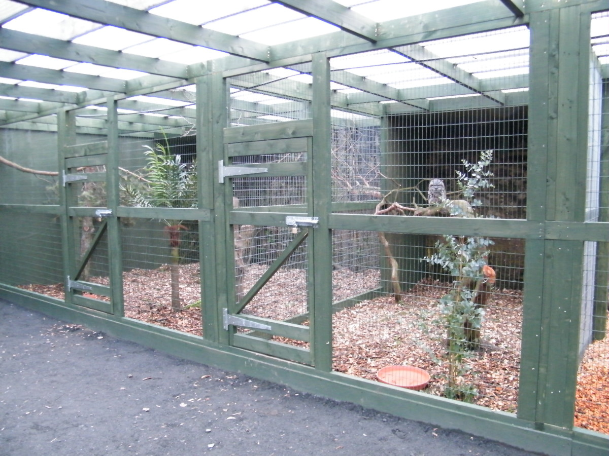 An appropriate enclosure for Great horned owls (Bubo virginianus) and other similarly sized owls.