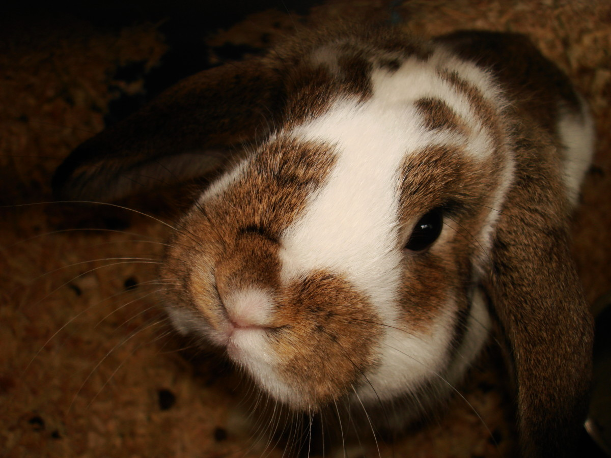 In 2011, 58 companion animals (like rabbits) were taken in. Only 4 were spared.
