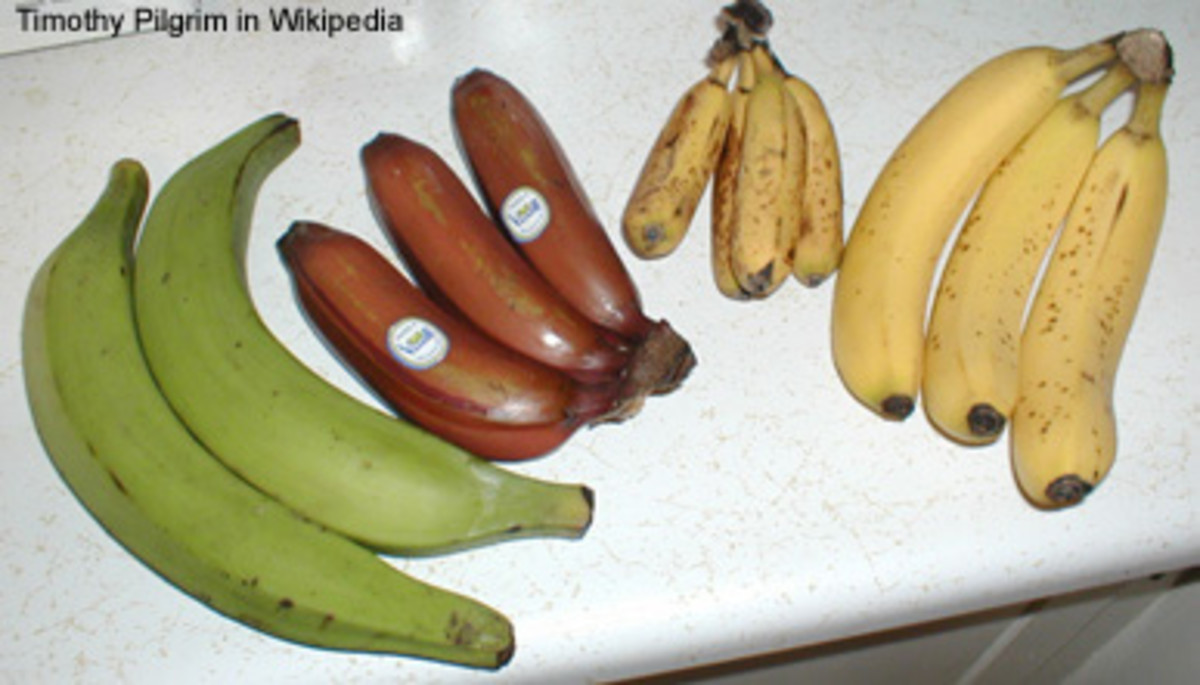 Varieties of Banana