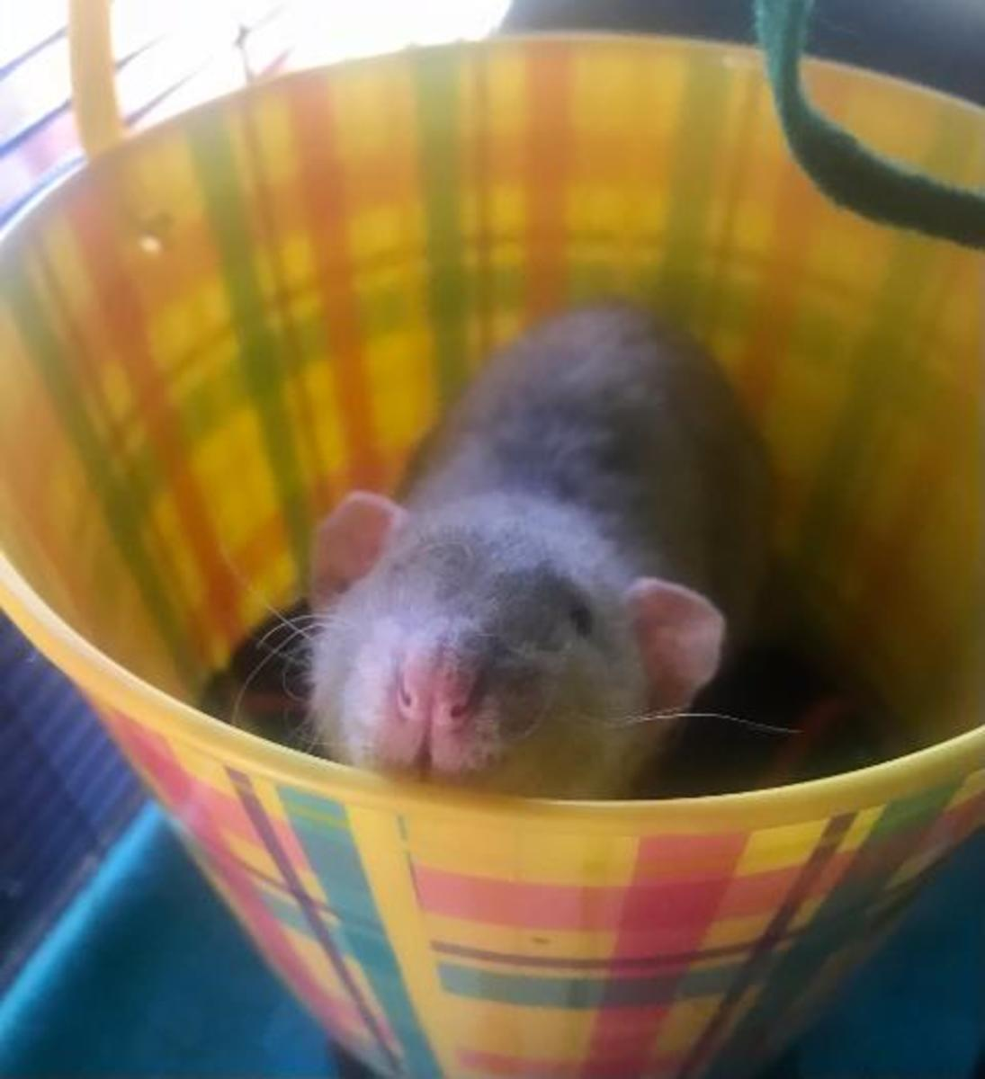 This is a plastic bucket that I got on sale after easter. All of my boys liked to hang out in it and it was very inexpensive!