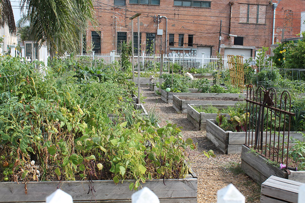 City dwellers can still enjoy fresh gardens by forming community garden groups.