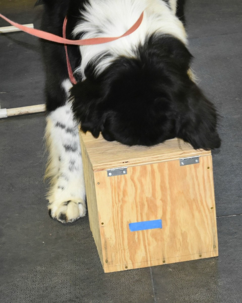 Scent Work - The Nose Knows!