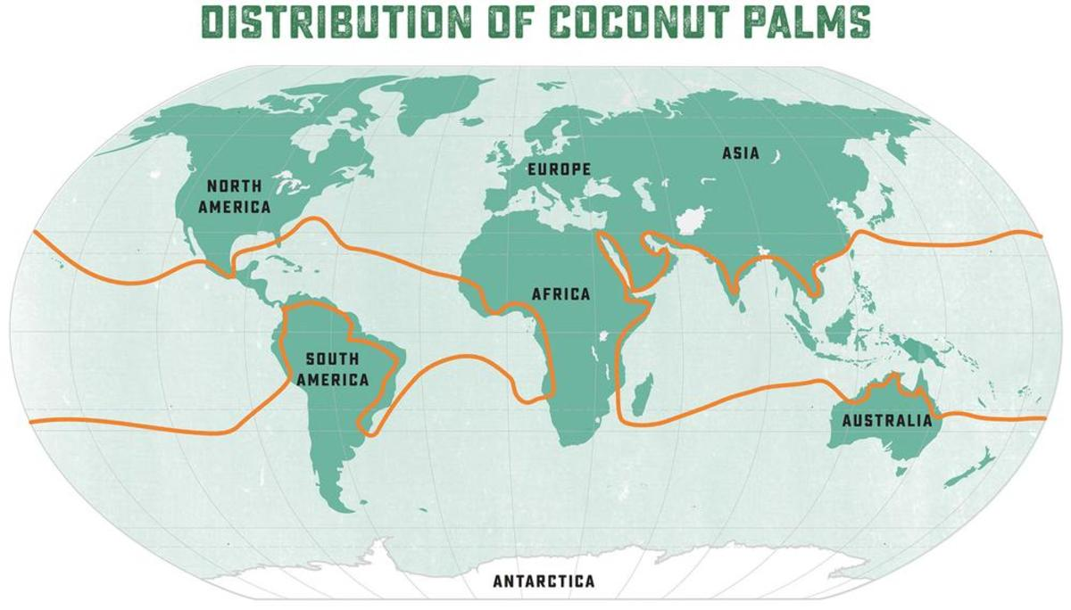 Map of where coconuts grow