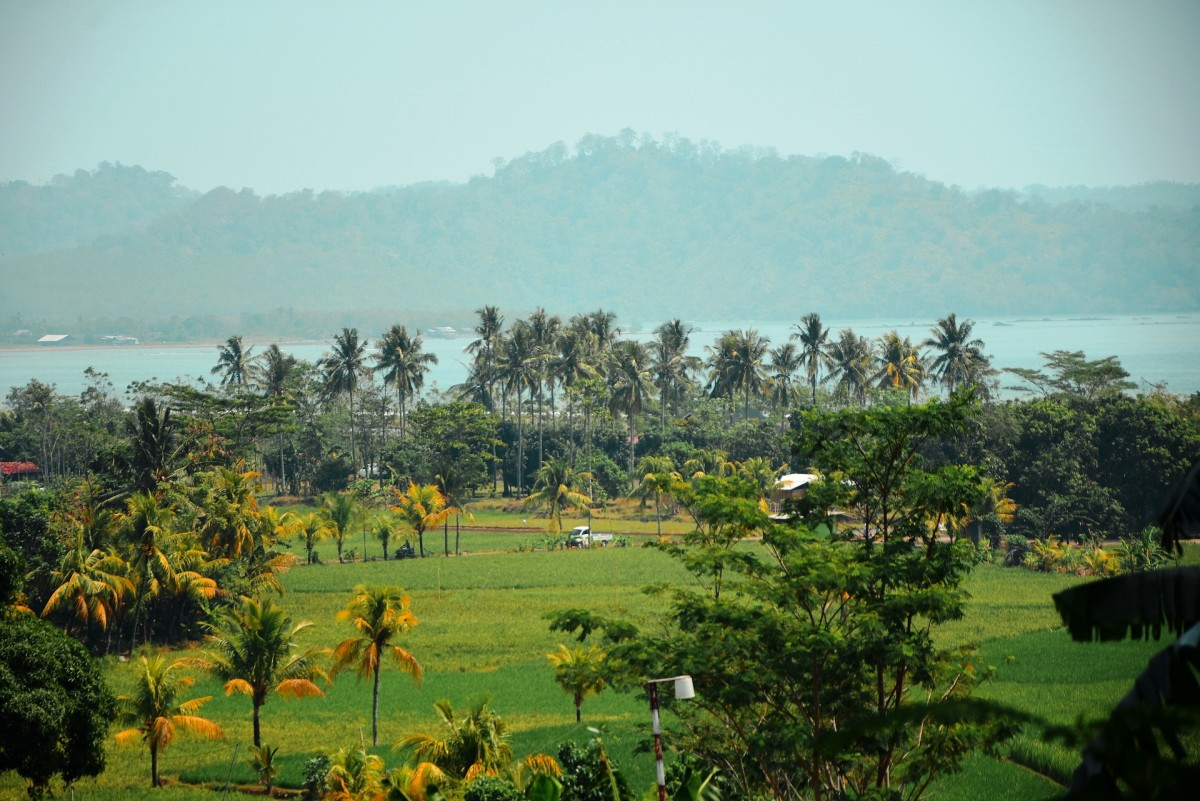 Indonesian palm trees