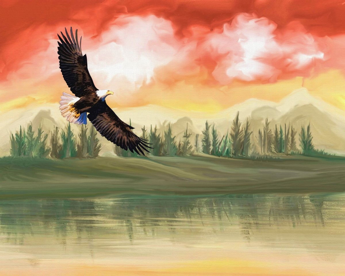 Red, orange, and yellow hues streak across a sky dotted with white clouds. A border of pine trees on land are reflected in yellow tinted water. A flying eagles graces the sky.