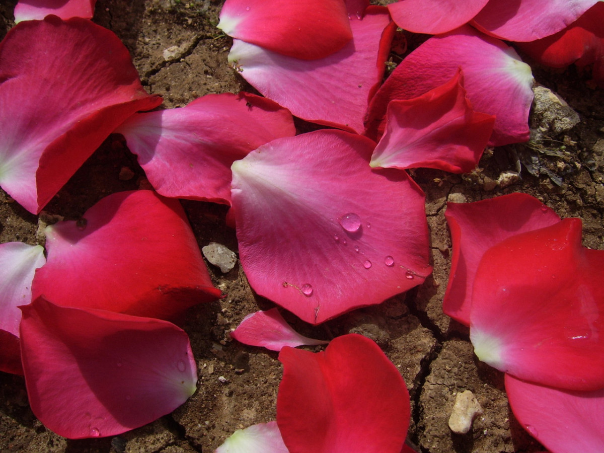 Rose petals, like the red rose, means passion and love. Petals are a romantic addition to a candle light dinner or love letter.