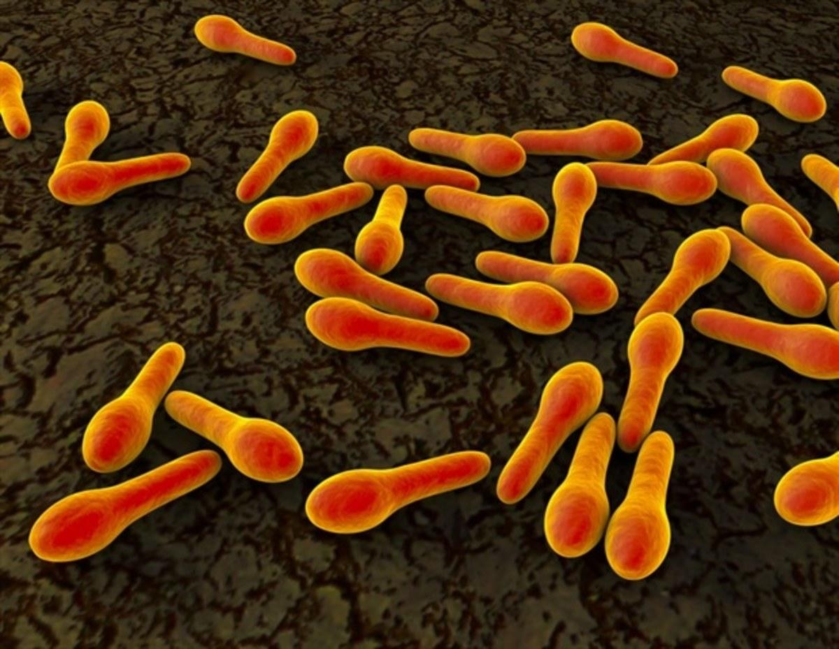 Bacterium of the tetanus disease.