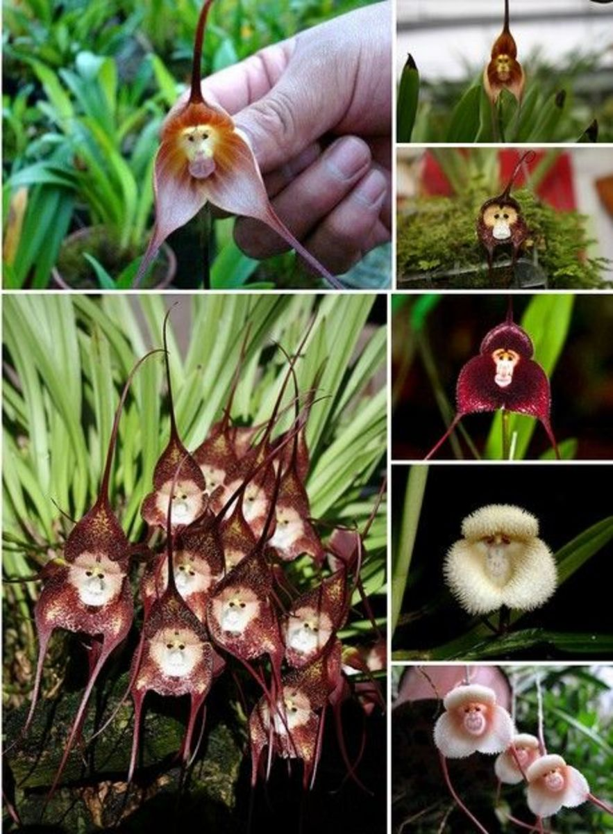 unique-and-stange-flowers-in-the-world