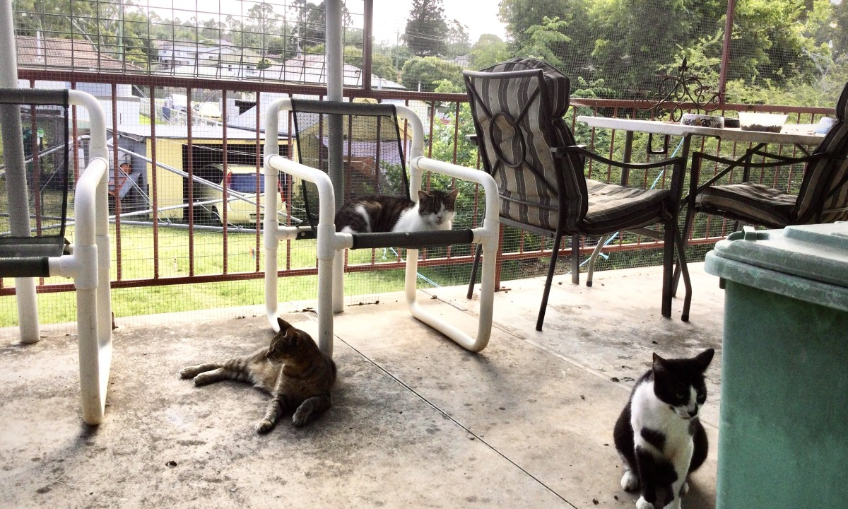 Cats, Fanny, Humphrey, and Nike. Three guardians of the porch.