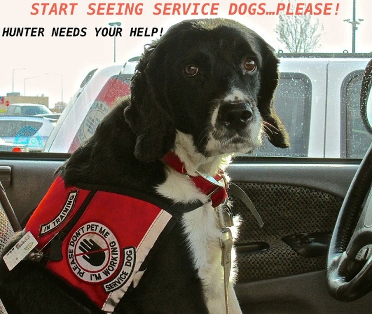 Start Seeing Service Dogs!