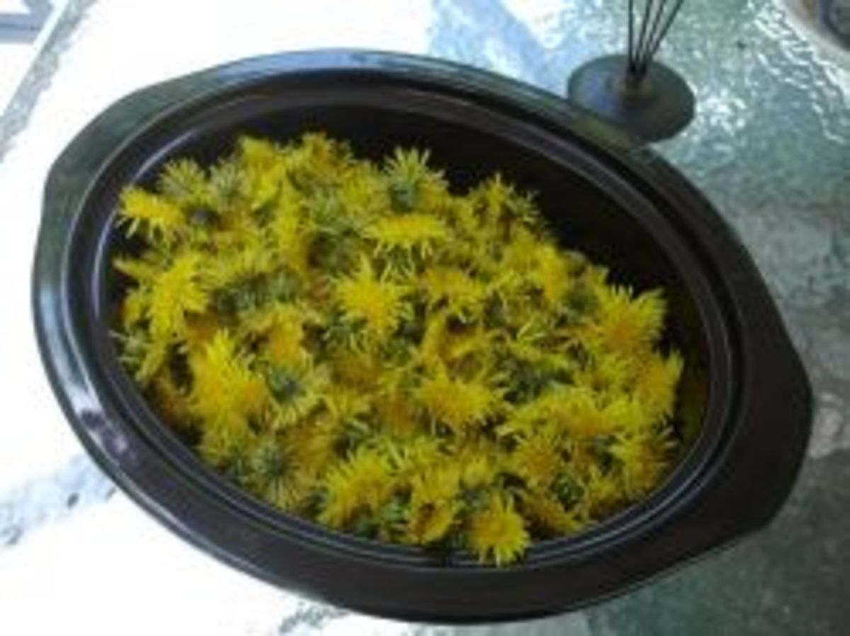 Image credit: http://www.wineintro.com/making/batches/dandelion/dandelionwine2007/