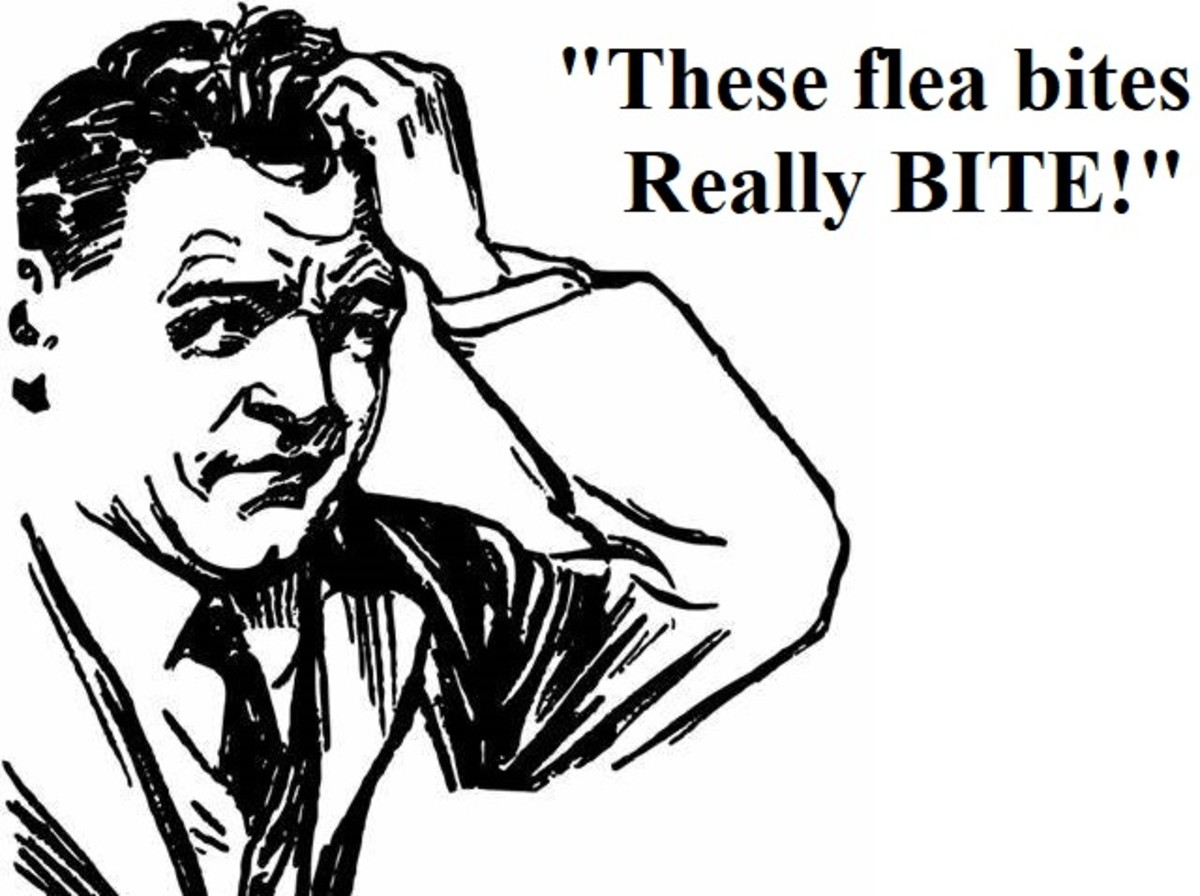 This says it all about fleas.