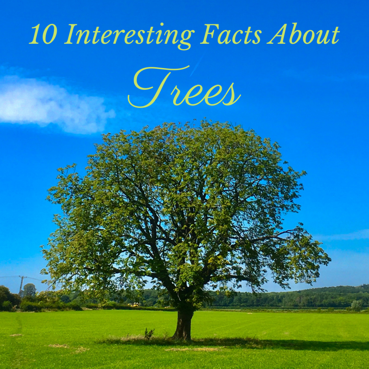 This article will provide 10 fascinating facts about trees that you perhaps did not know.