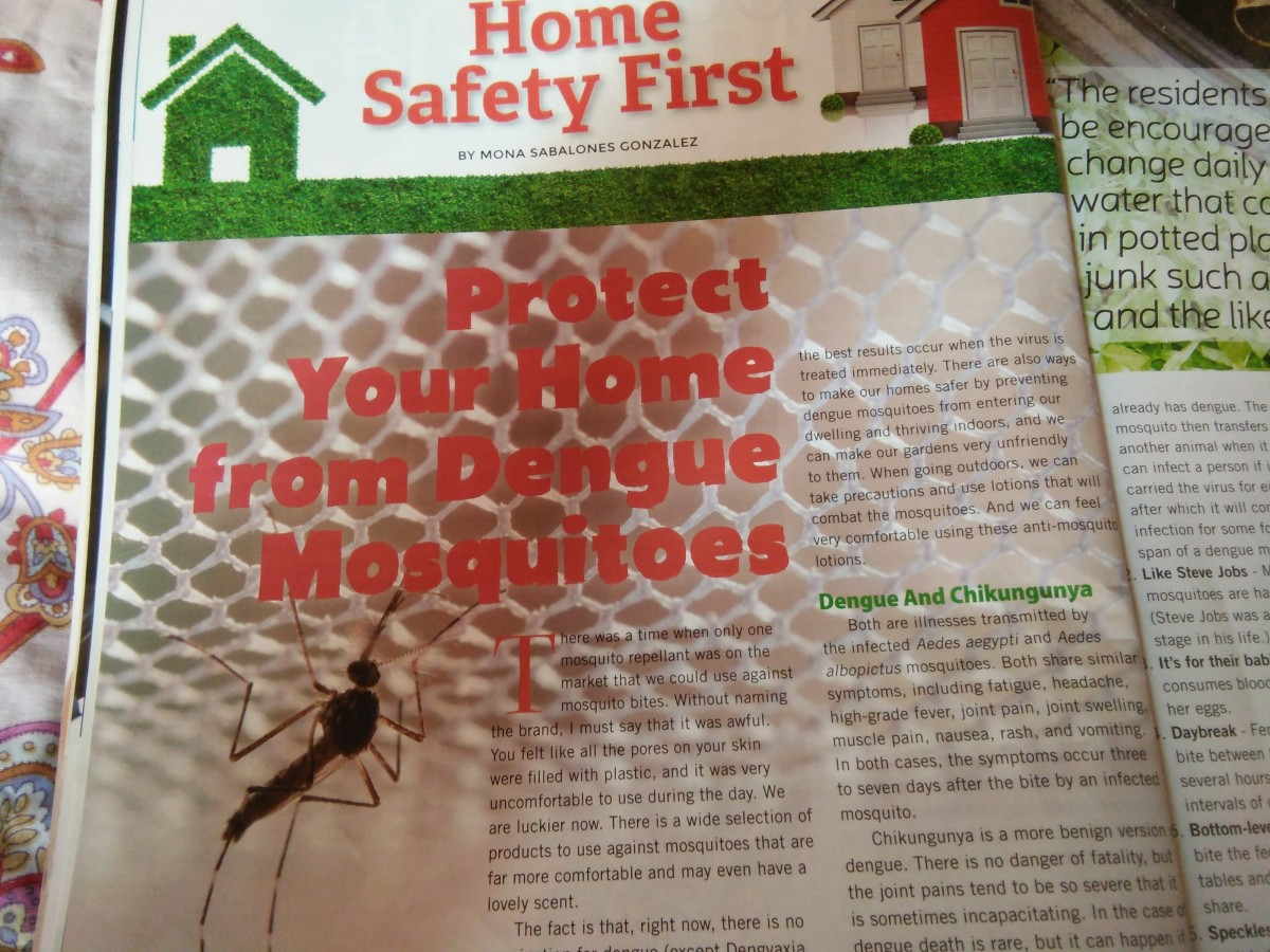 Protect Your Home From Dengue