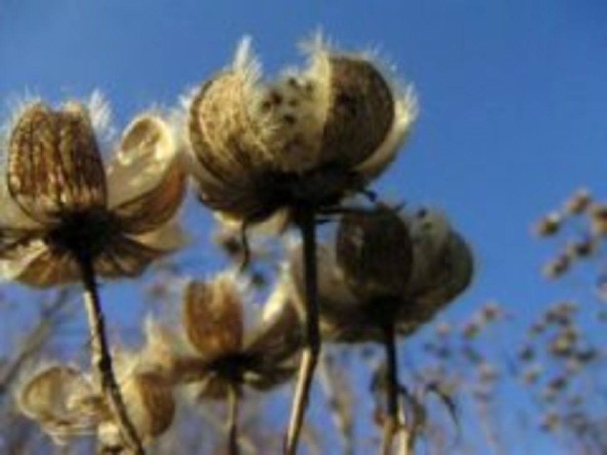 10 Plant and Seed Catalogs to Brighten the Winter Season