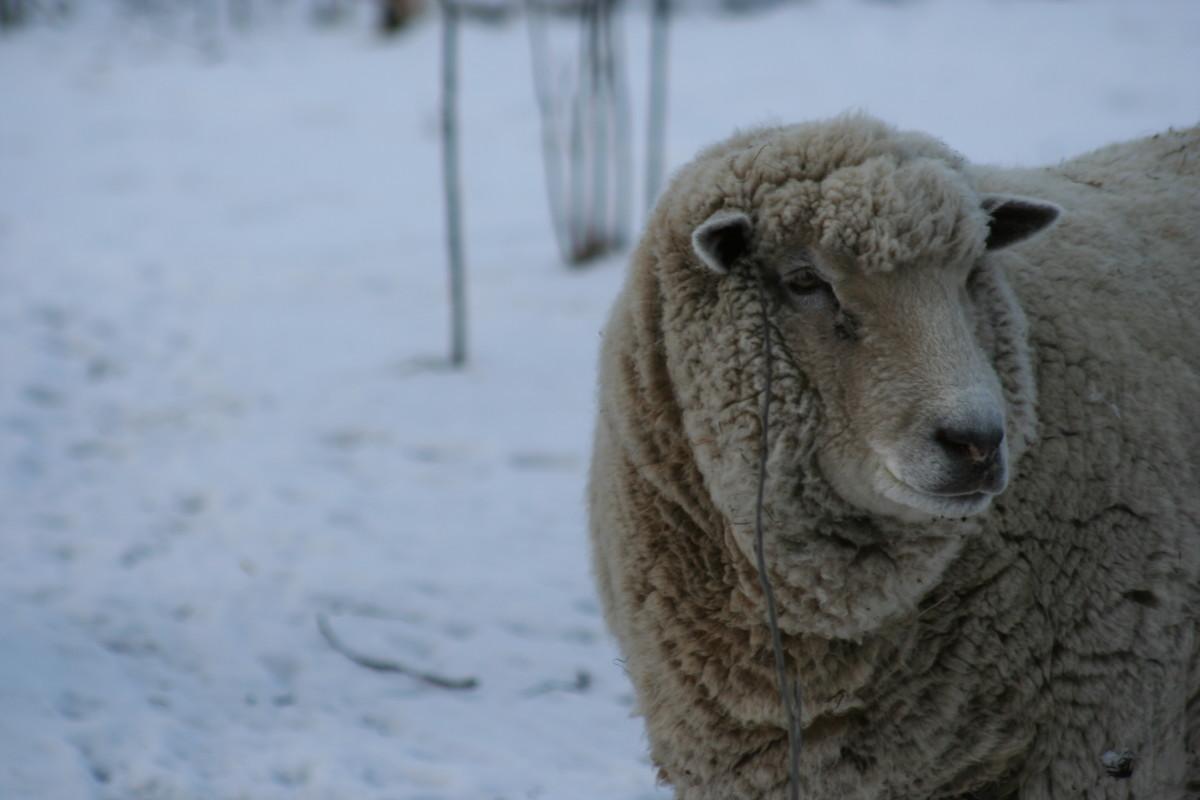 vegan-wool
