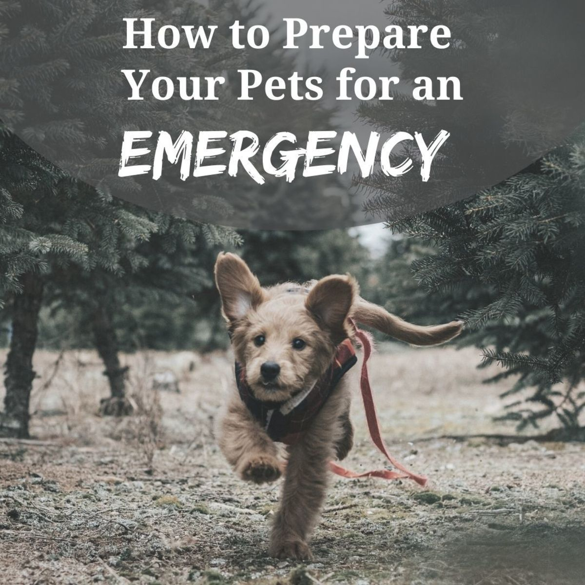 How to Train Your Pets for an Emergency