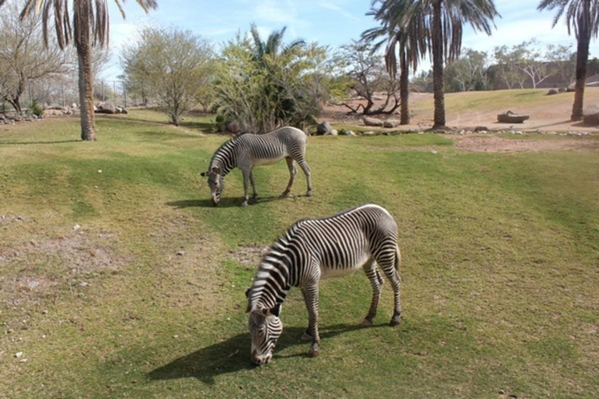 Best Tourist Attractions in Arizona