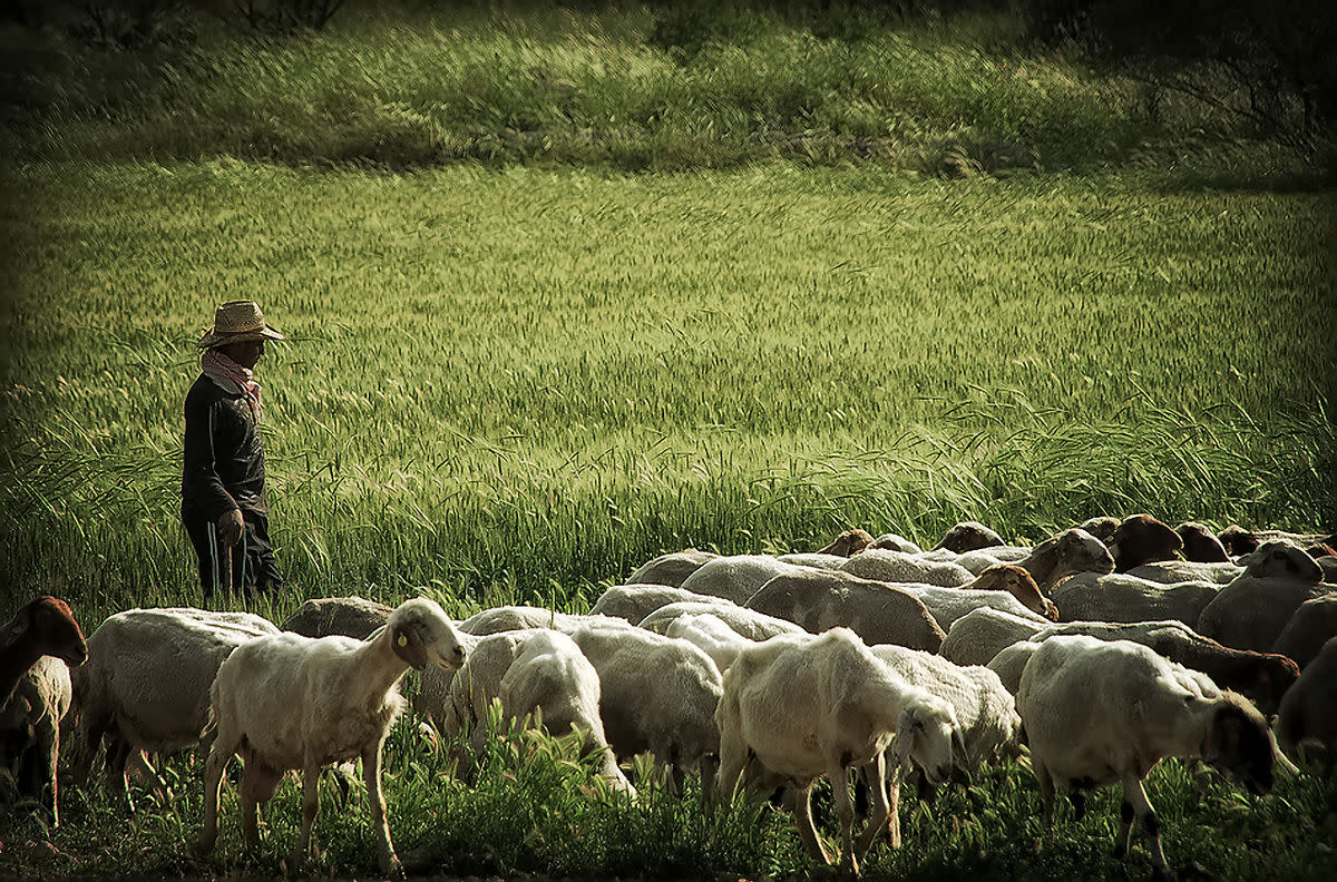 a-new-christian-perspective-the-parable-of-the-lost-sheep