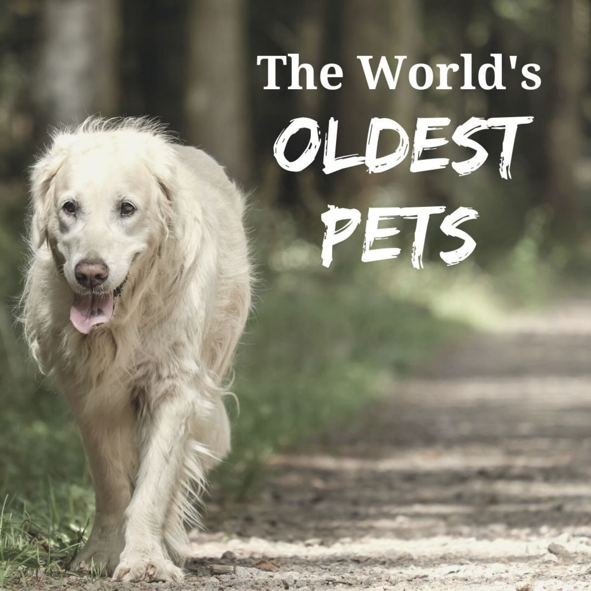 The oldest pets in the world