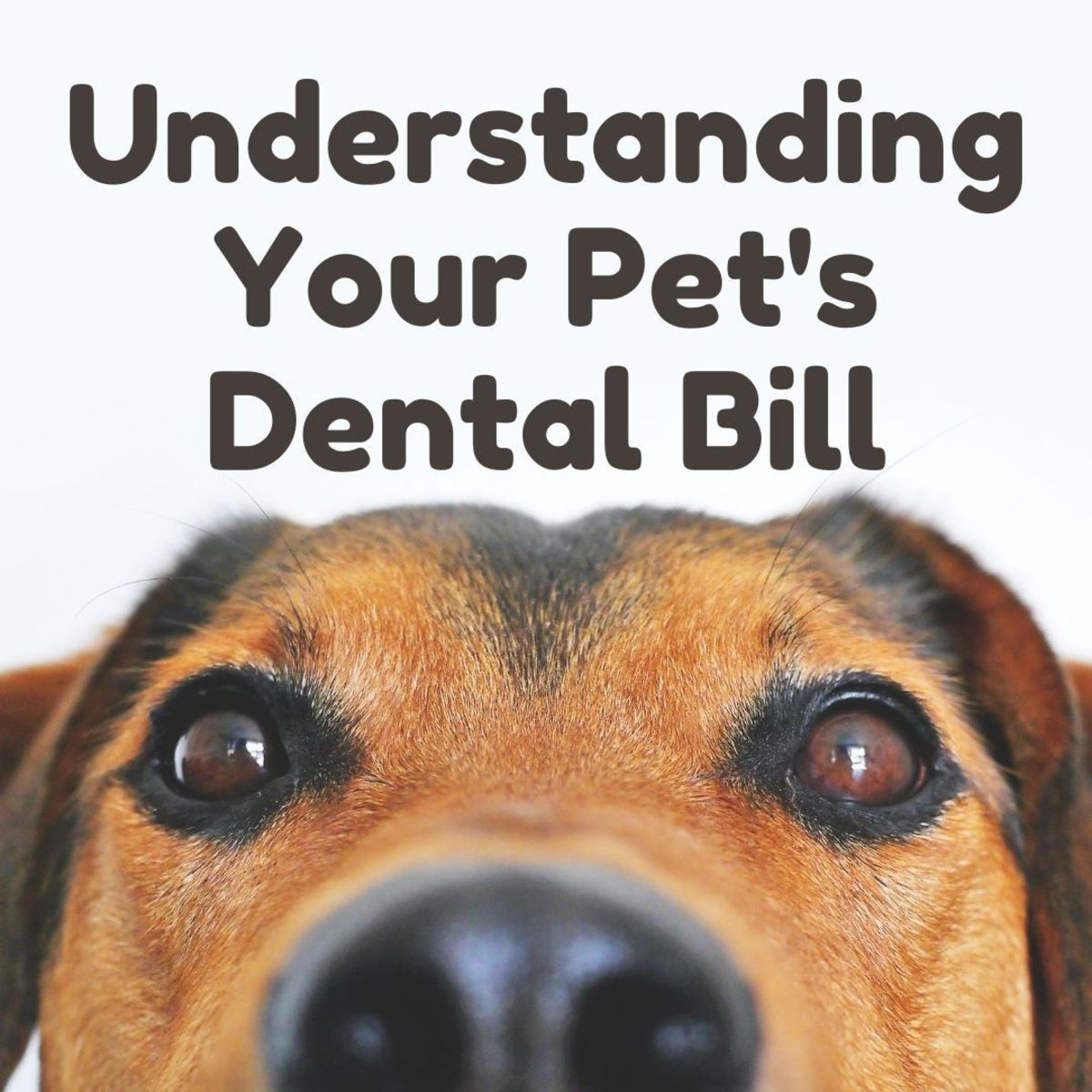 Why is your pet's teeth-cleaning bill so expensive?