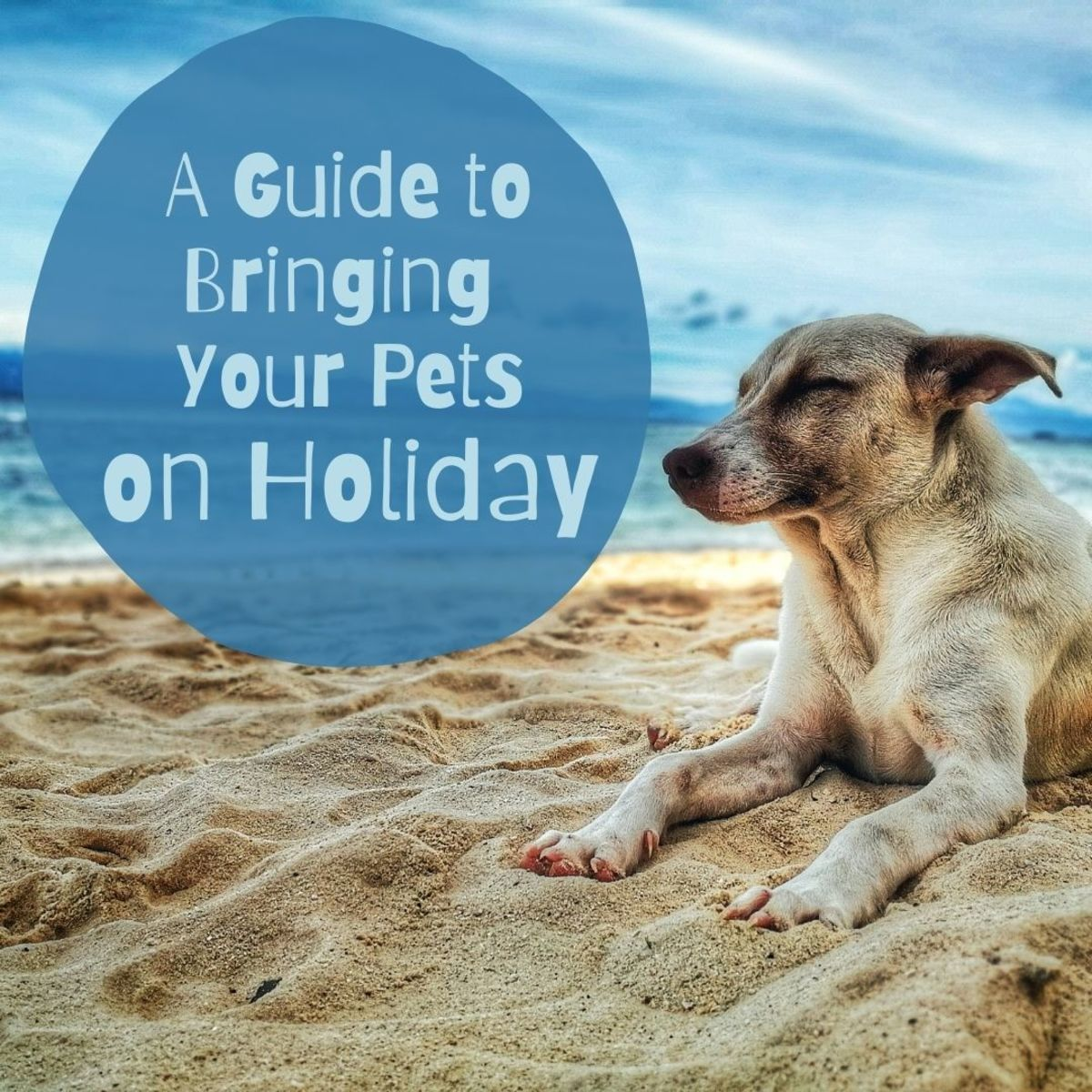 Take your pets with you when you travel!
