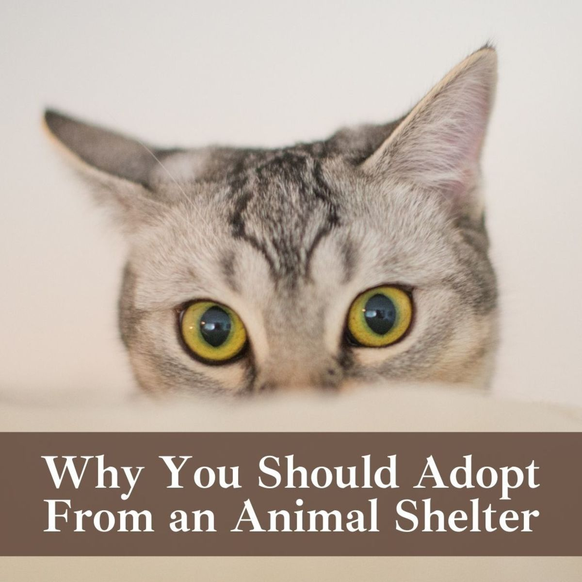Consider adopting a pet from a shelter rather than a pet shop or breeder!