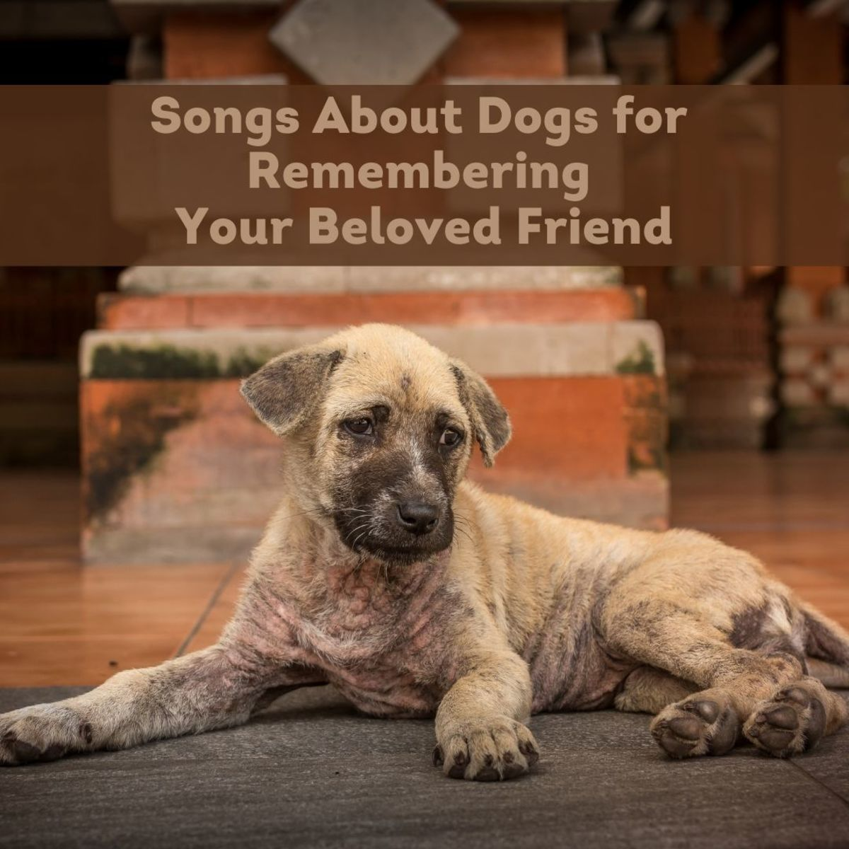 Top 16 Songs About Dogs for When You Lose Your Dog