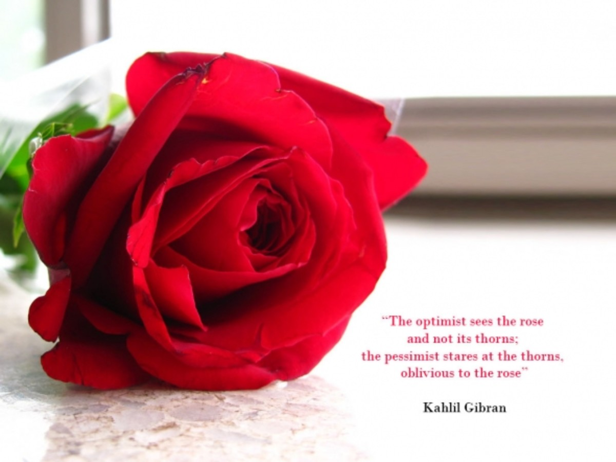 red rose desktop wallpaper