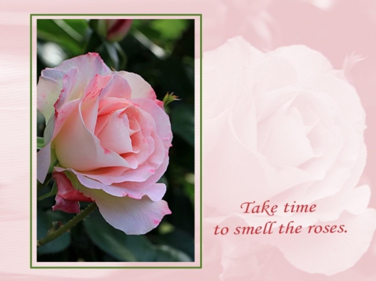 pink rose desktop wallpaper
