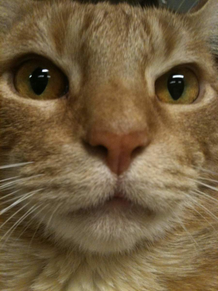 Perineal Urethrostomy in Cats with FLUTD