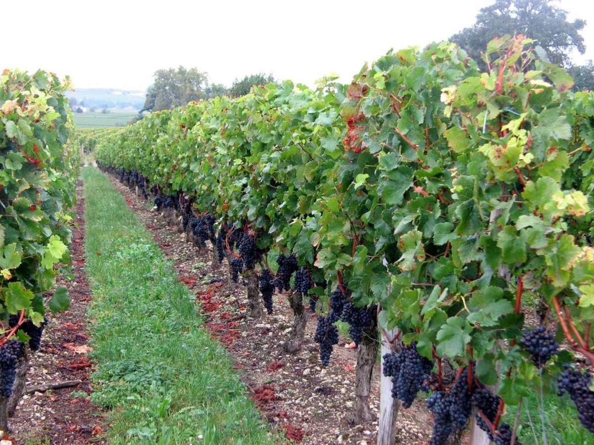 Bordeaux Wine Region: Vineyards & Wineries