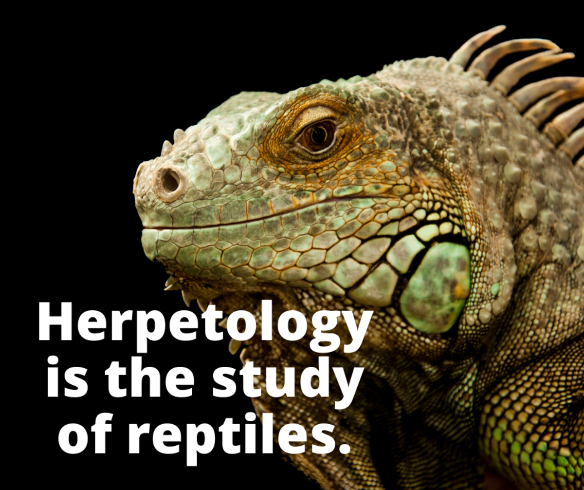 Herpetology is the study of reptiles.