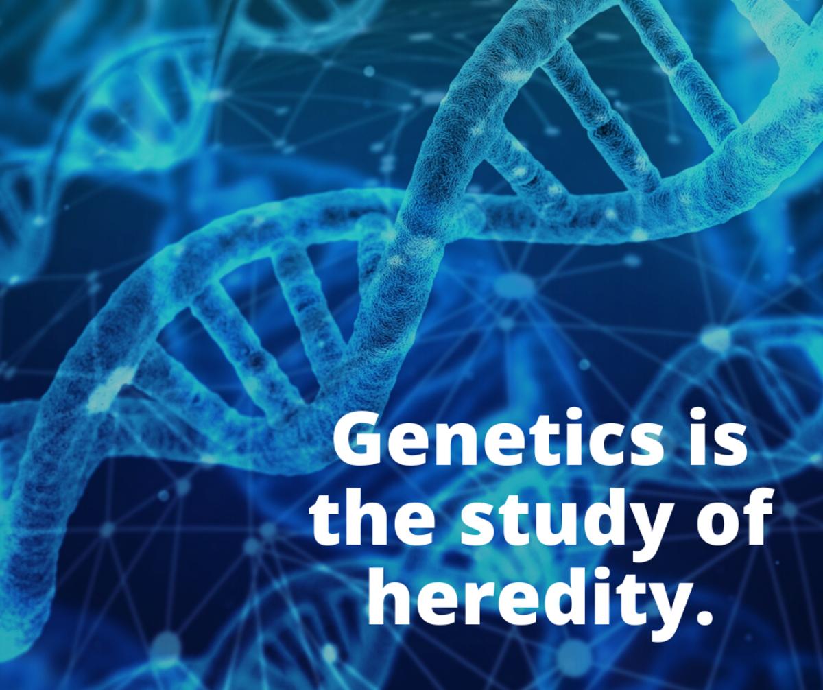 Genetics is the study of heredity.