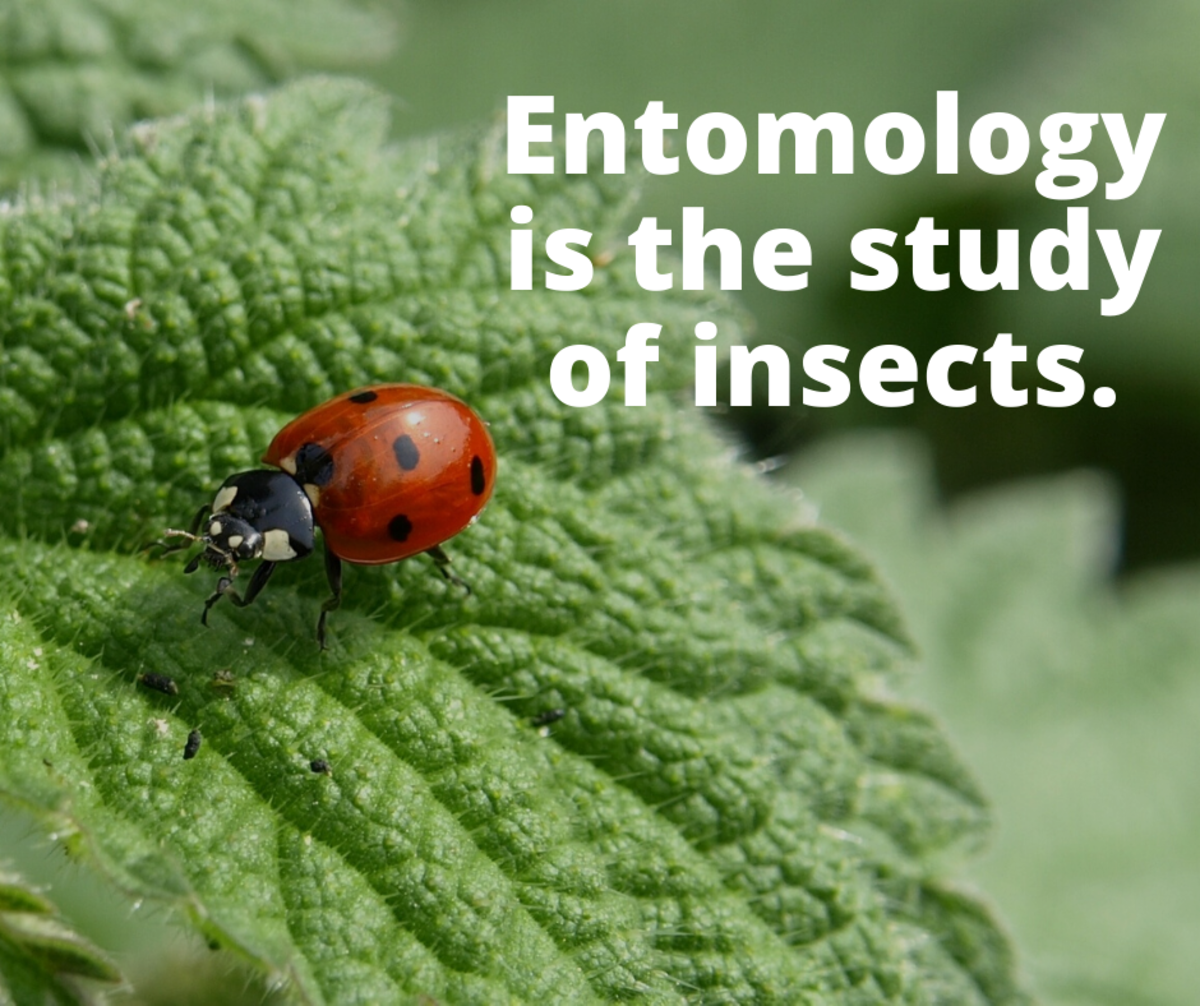 Entomology is the study of insects.