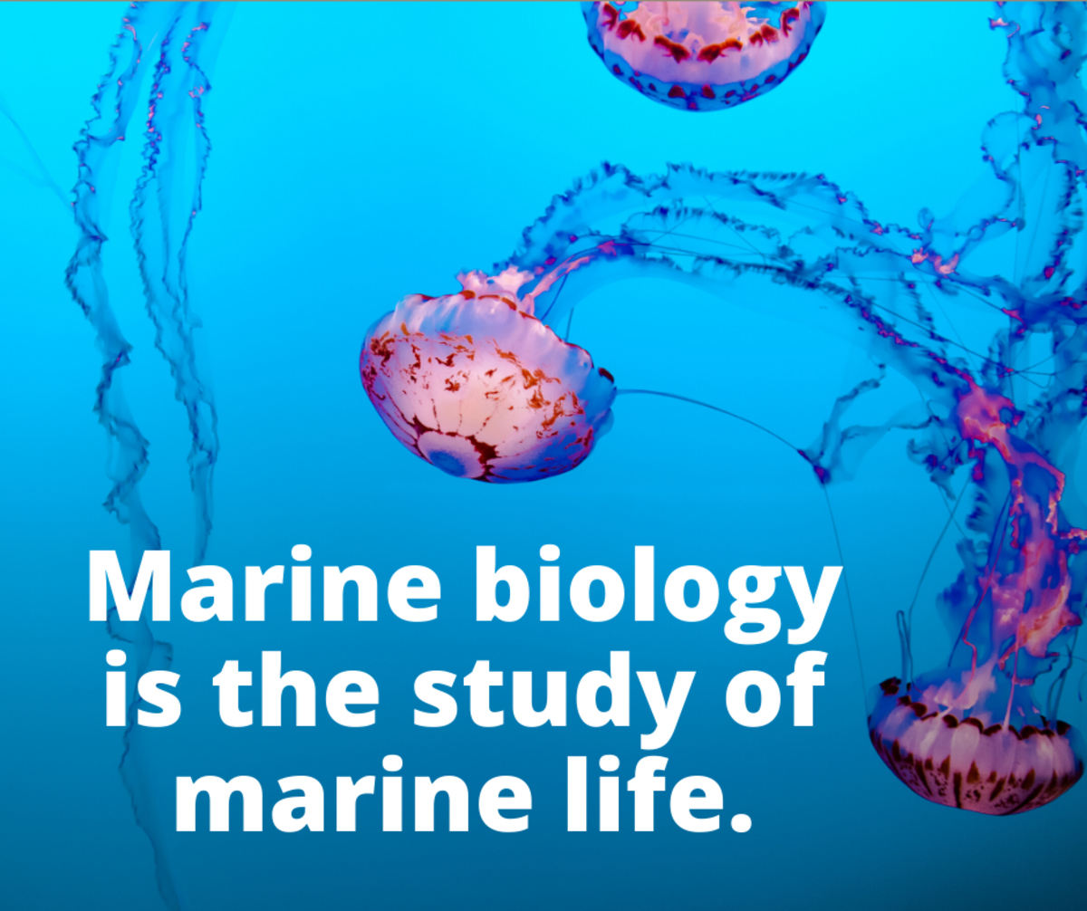 Marine biology is the study of marine life.
