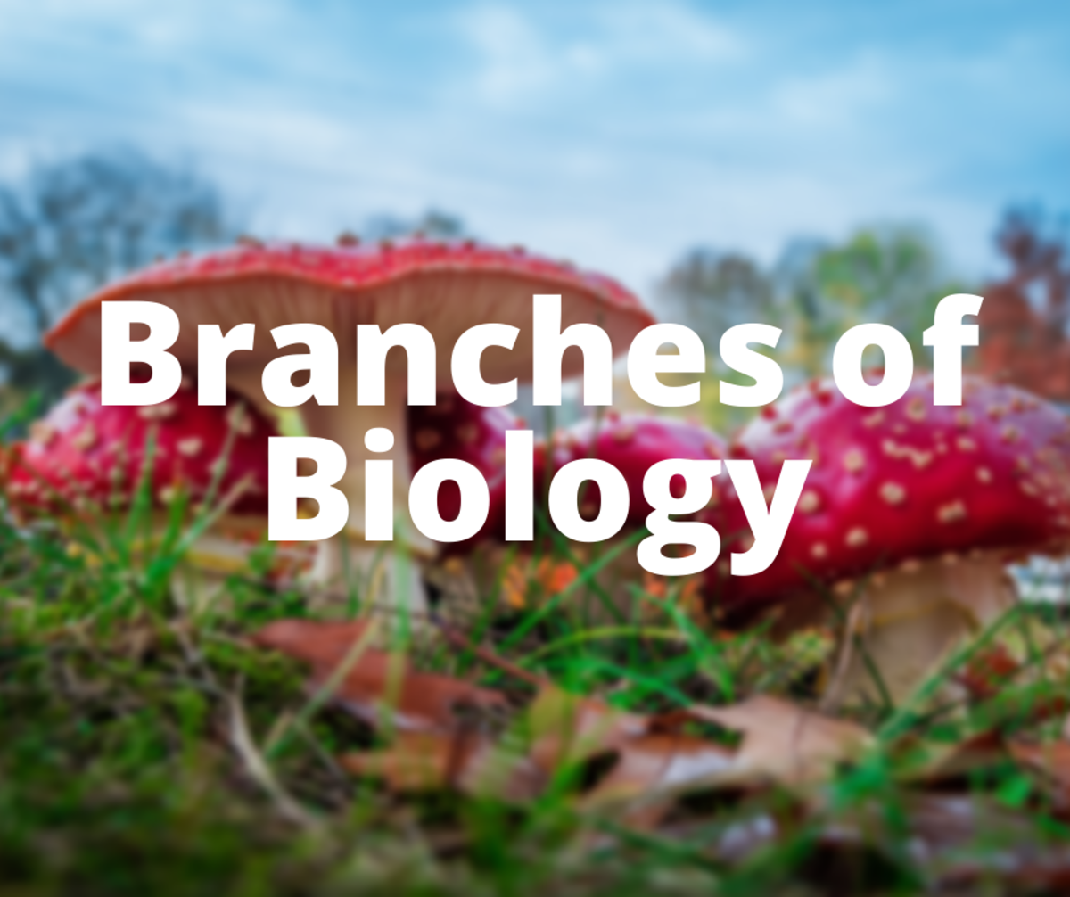 The Branches (and Areas) of Biology