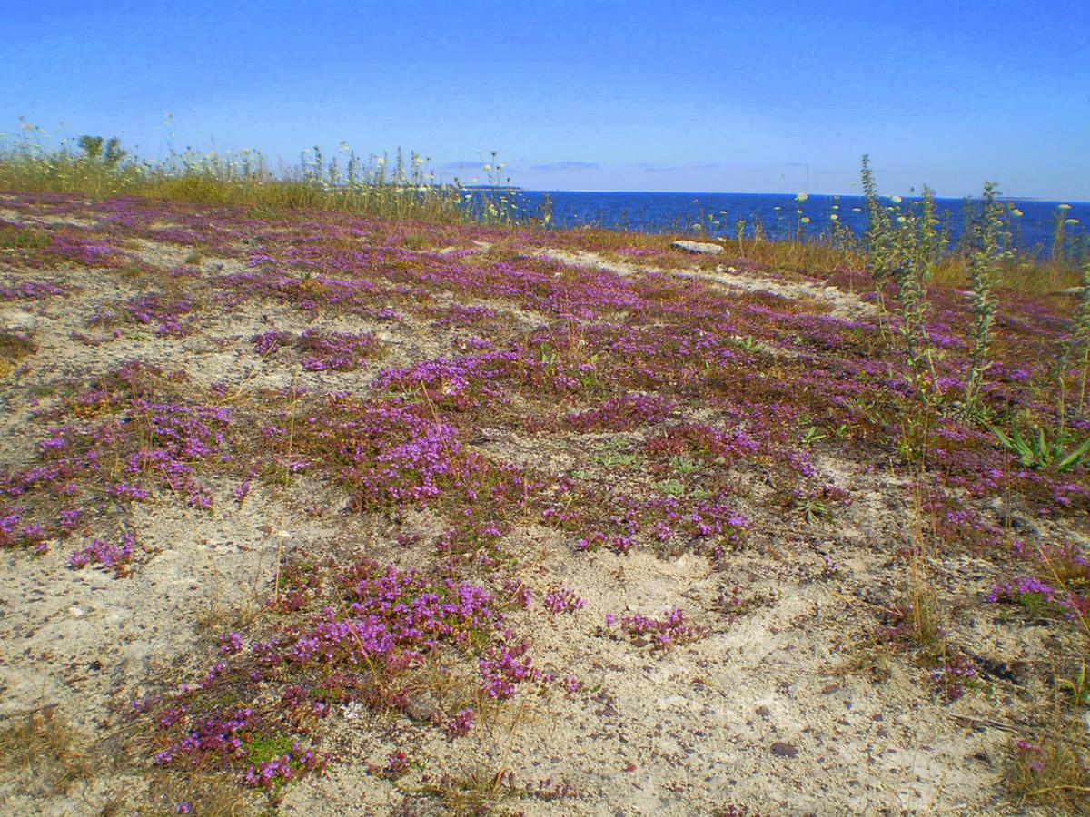 Lörje beach on Gotland