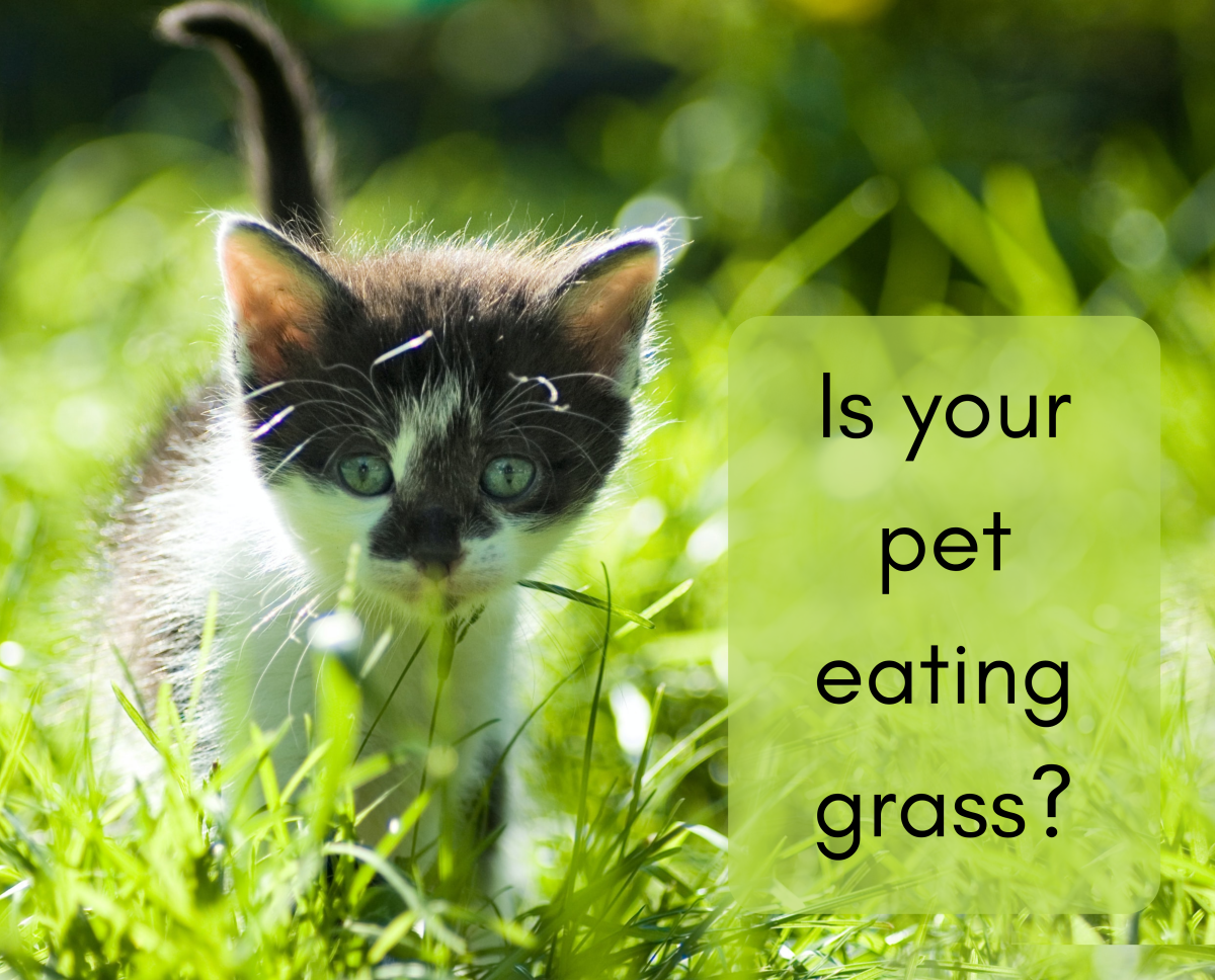 Find out why your pet may be eating grass...